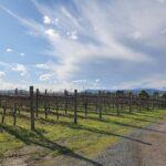 Wine Buffs Tour - Yarra Valley & Mornington